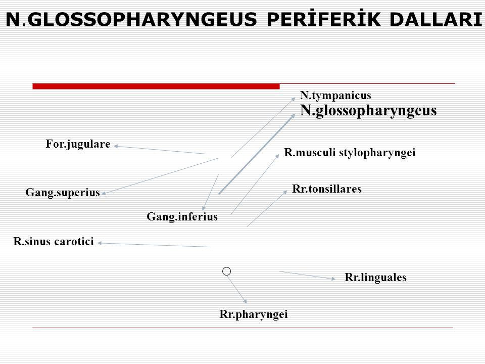 R.sinus carotici Rr.pharyngei Rr.linguales Rr.tonsillares R.musculi stylopharyngei N.glossopharyngeus N.tympanicus Gang.inferius Gang.superius For.jug