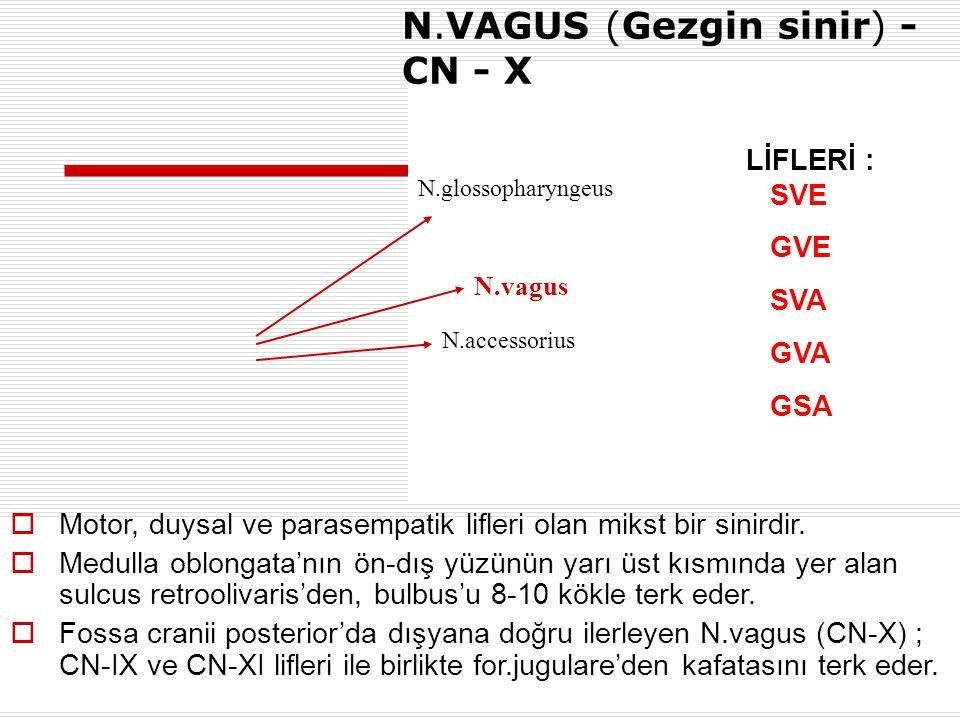 N.vagus N.VAGUS (Gezgin sinir) - CN - X N.glossopharyngeus N.accessorius  Motor, duysal ve parasempatik lifleri olan mikst bir sinirdir.  Medulla ob
