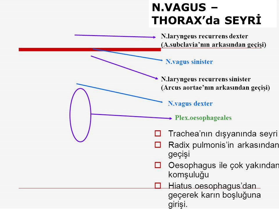 N.laryngeus recurrens dexter (A.subclavia'nın arkasından geçişi) N.laryngeus recurrens sinister (Arcus aortae'nın arkasından geçişi) Plex.oesophageale