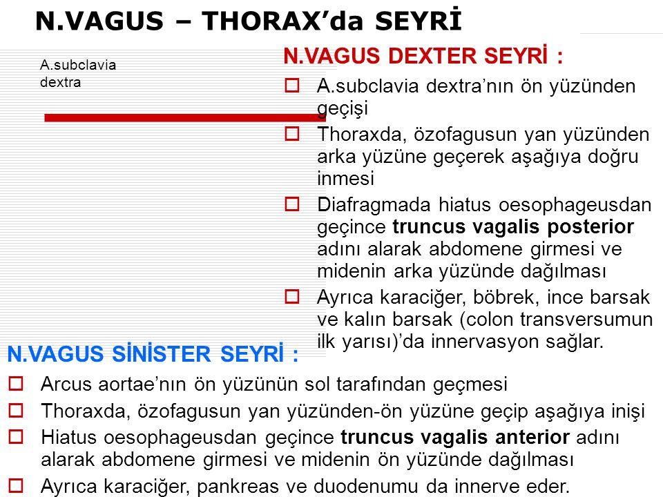N.VAGUS – THORAX'da SEYRİ  A.subclavia dextra'nın ön yüzünden geçişi  Thoraxda, özofagusun yan yüzünden arka yüzüne geçerek aşağıya doğru inmesi  D