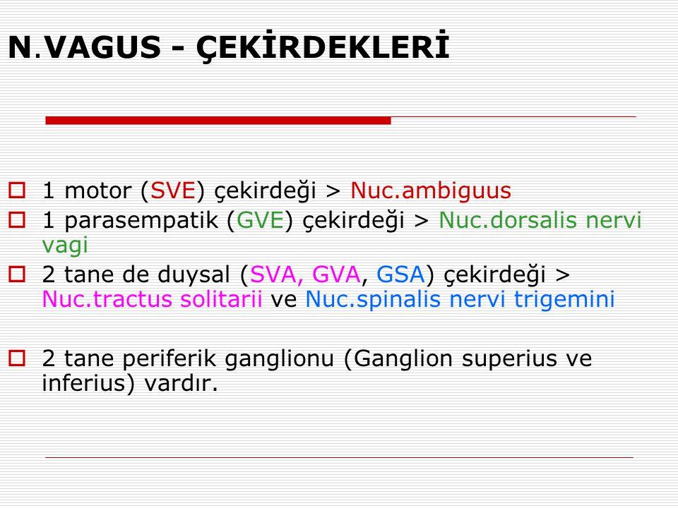 N.VAGUS - ÇEKİRDEKLERİ  1 motor (SVE) çekirdeği > Nuc.ambiguus  1 parasempatik (GVE) çekirdeği > Nuc.dorsalis nervi vagi  2 tane de duysal (SVA, GV