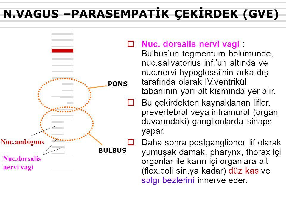 N.VAGUS –PARASEMPATİK ÇEKİRDEK (GVE) BULBUS PONS Nuc.ambiguus Nuc.dorsalis nervi vagi  Nuc. dorsalis nervi vagi : Bulbus'un tegmentum bölümünde, nuc.