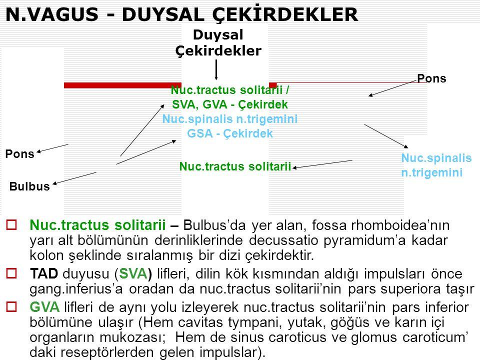 N.VAGUS - DUYSAL ÇEKİRDEKLER Nuc.tractus solitarii / SVA, GVA - Çekirdek Nuc.spinalis n.trigemini GSA - Çekirdek Pons  Nuc.tractus solitarii – Bulbus