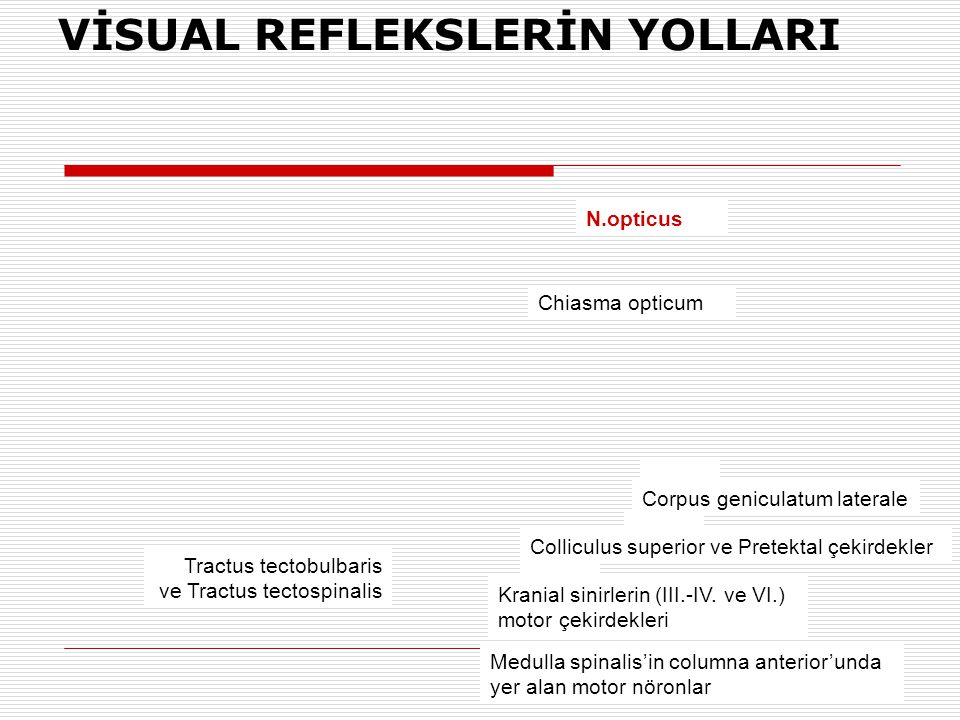 VİSUAL REFLEKSLERİN YOLLARI N.opticus Chiasma opticum Corpus geniculatum laterale Colliculus superior ve Pretektal çekirdekler Kranial sinirlerin (III.-IV.