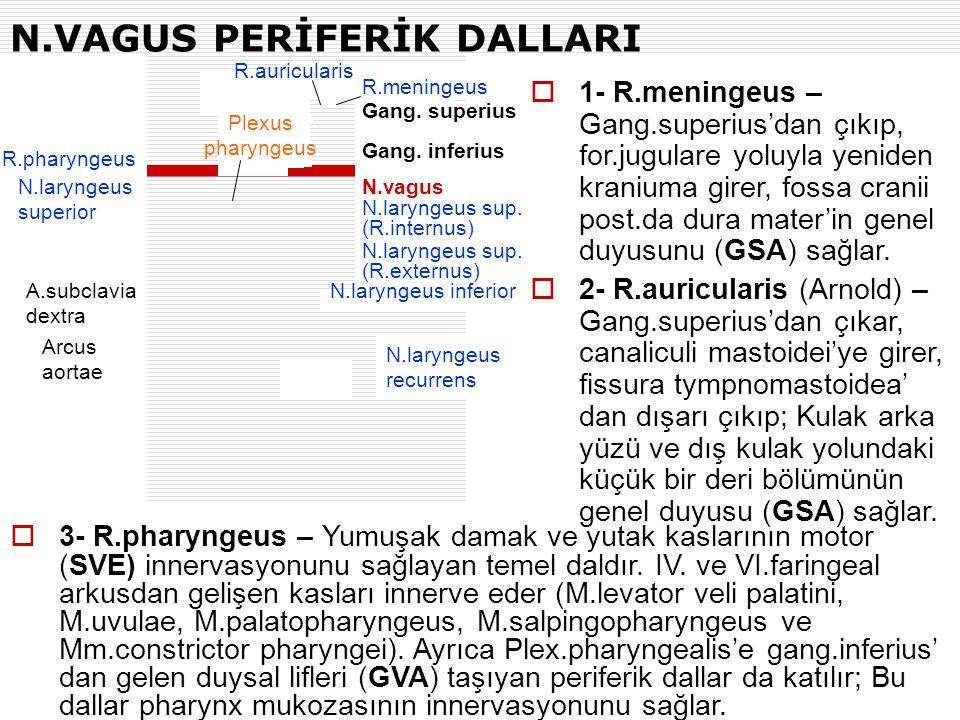 N.VAGUS PERİFERİK DALLARI R.pharyngeus N.laryngeus superior A.subclavia dextra Arcus aortae R.auricularis N.vagus R.meningeus Gang. superius Gang. inf