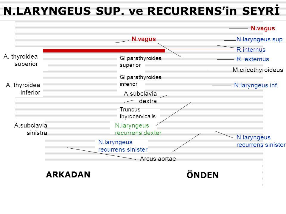 N.LARYNGEUS SUP. ve RECURRENS'in SEYRİ A. thyroidea superior A. thyroidea inferior A.subclavia sinistra Gl.parathyroidea superior Gl.parathyroidea inf
