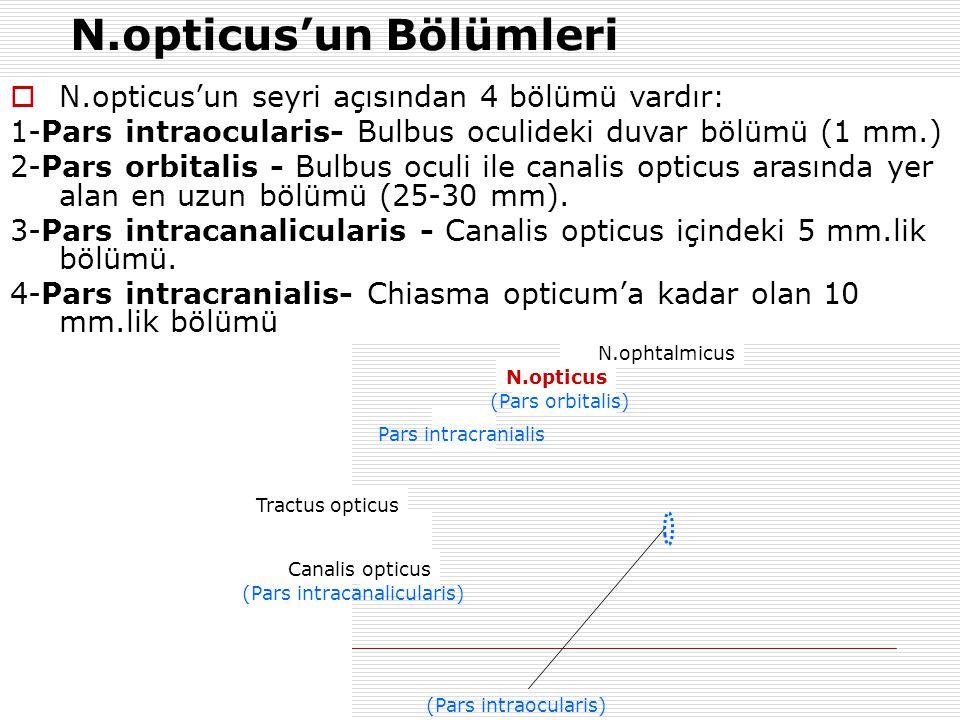  N.opticus'un seyri açısından 4 bölümü vardır: 1-Pars intraocularis- Bulbus oculideki duvar bölümü (1 mm.) 2-Pars orbitalis - Bulbus oculi ile canali