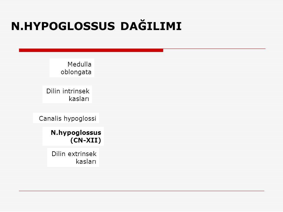 N.HYPOGLOSSUS DAĞILIMI Medulla oblongata Dilin intrinsek kasları Canalis hypoglossi Dilin extrinsek kasları N.hypoglossus (CN-XII)