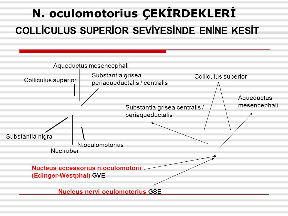 N. oculomotorius ÇEKİRDEKLERİ COLLİCULUS SUPERİOR SEVİYESİNDE ENİNE KESİT Nucleus nervi oculomotorius GSE Nucleus accessorius n.oculomotorii (Edinger-