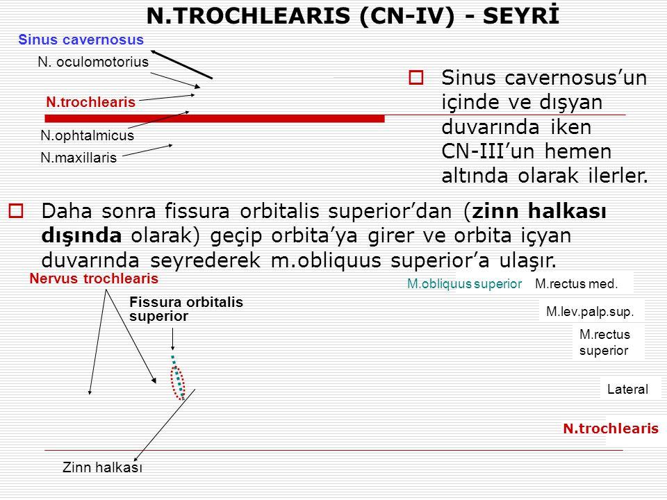 N.trochlearis N.ophtalmicus N.maxillaris Sinus cavernosus N. oculomotorius Zinn halkası Nervus trochlearis  Sinus cavernosus'un içinde ve dışyan duva