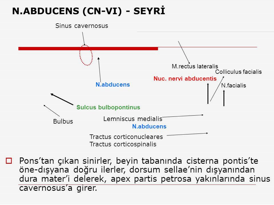 N.abducens Sulcus bulbopontinus Nuc. nervi abducentis N.facialis Lemniscus medialis Tractus corticonucleares Tractus corticospinalis N.abducens Collic