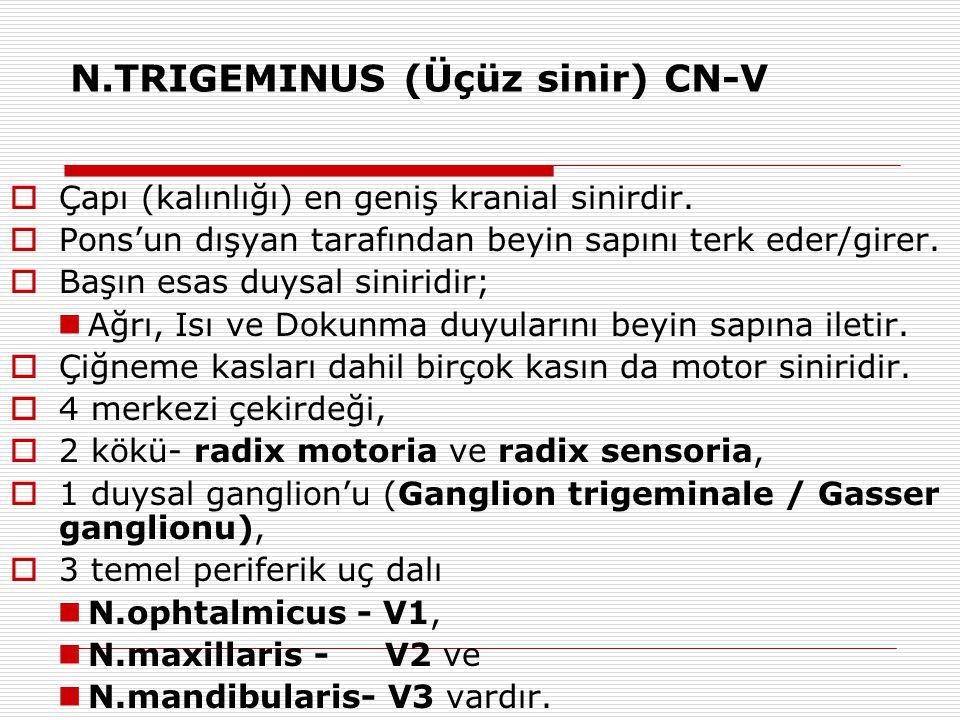 N.TRIGEMINUS (Üçüz sinir) CN-V  Çapı (kalınlığı) en geniş kranial sinirdir.  Pons'un dışyan tarafından beyin sapını terk eder/girer.  Başın esas du