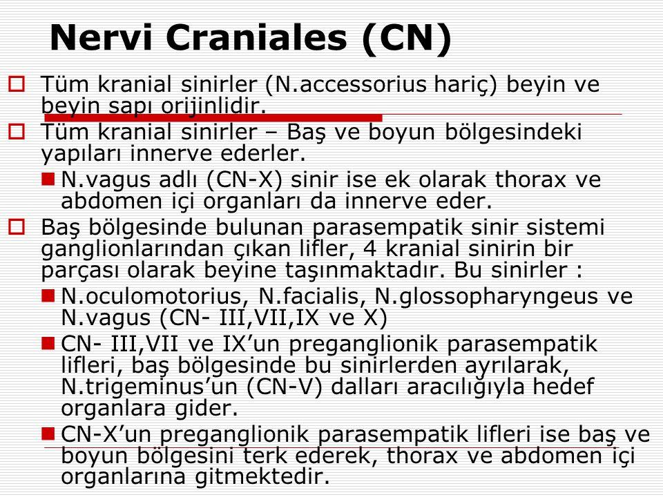 KRANİYAL SİNİRLERİN GENEL ÖZELLİKLERİ Spinal sinirlerlerden farklı olarak düzensiz çıkış düzeyleri Kafatasını farklı delik ya da kanallardan terk etmesi Farklı işlevsel lif komponentlerinin olması CN IV dışında hepsi ön yüzden çıkar CN VIII kafatasını terk etmez Motor çekirdeklerin periferik uzantıları (CN-IV dışında) aynı taraf yapılarına ulaşır Duysal ganglionları çıkış yerlerine yakın ya da uzak olabilir Motor çekirdekleri, ikisi hariç (VII ve XII) her iki korteksten innerve olur 4 kranial sinirin (CN III-VII-IX-X) parasempatik özellikleri vardır.