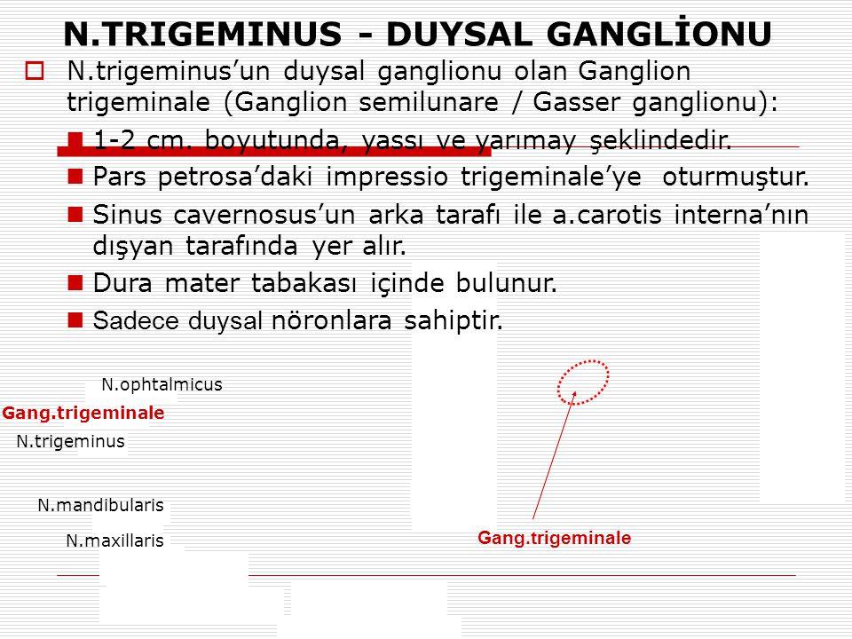 N.TRIGEMINUS - DUYSAL GANGLİONU Gang.trigeminale  N.trigeminus'un duysal ganglionu olan Ganglion trigeminale (Ganglion semilunare / Gasser ganglionu)