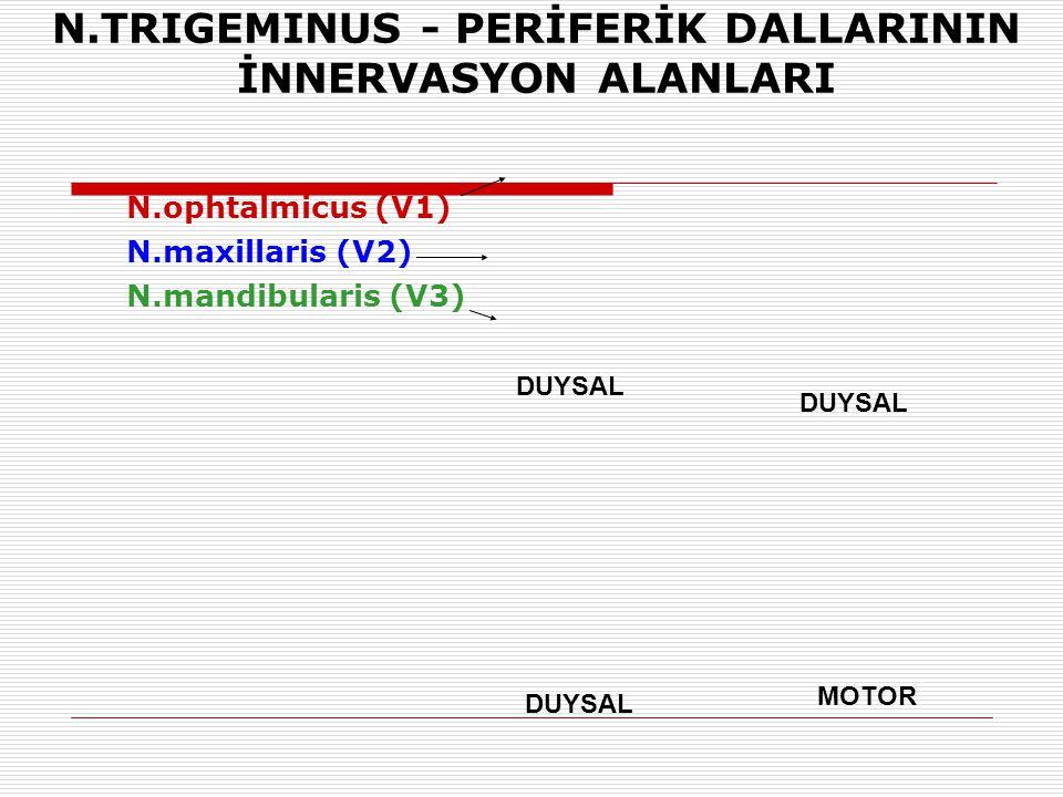 N.TRIGEMINUS - PERİFERİK DALLARININ İNNERVASYON ALANLARI N.ophtalmicus (V1) N.maxillaris (V2) N.mandibularis (V3) DUYSAL MOTOR