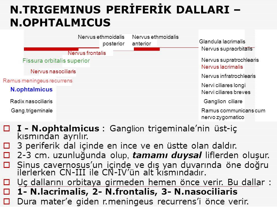N.TRIGEMINUS PERİFERİK DALLARI – N.OPHTALMICUS Gang.trigeminale Radix nasociliaris N.ophtalmicus Ramus meningeus recurrens Nervus nasociliaris Fissura