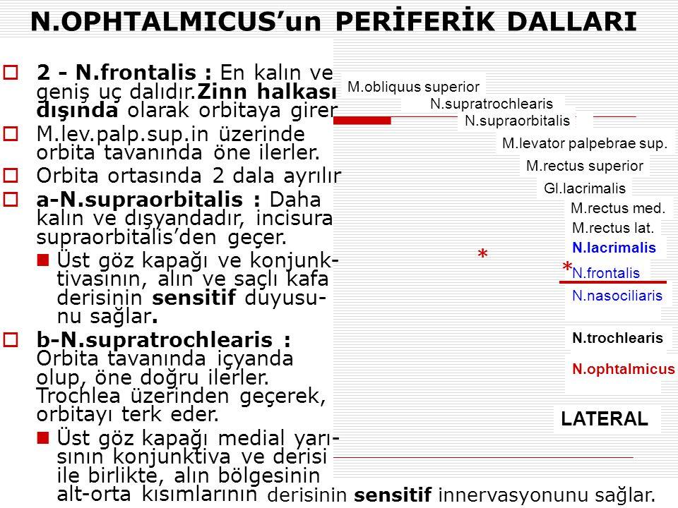 N.OPHTALMICUS'un PERİFERİK DALLARI M.obliquus superior N.supraorbitalis M.levator palpebrae sup. M.rectus superior Gl.lacrimalis N.lacrimalis M.rectus