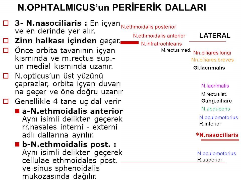 N.OPHTALMICUS'un PERİFERİK DALLARI N.ethmoidalis posterior N.ethmoidalis anterior N.infratrochlearis M.rectus med. Nn.ciliares longi Nn.ciliares breve