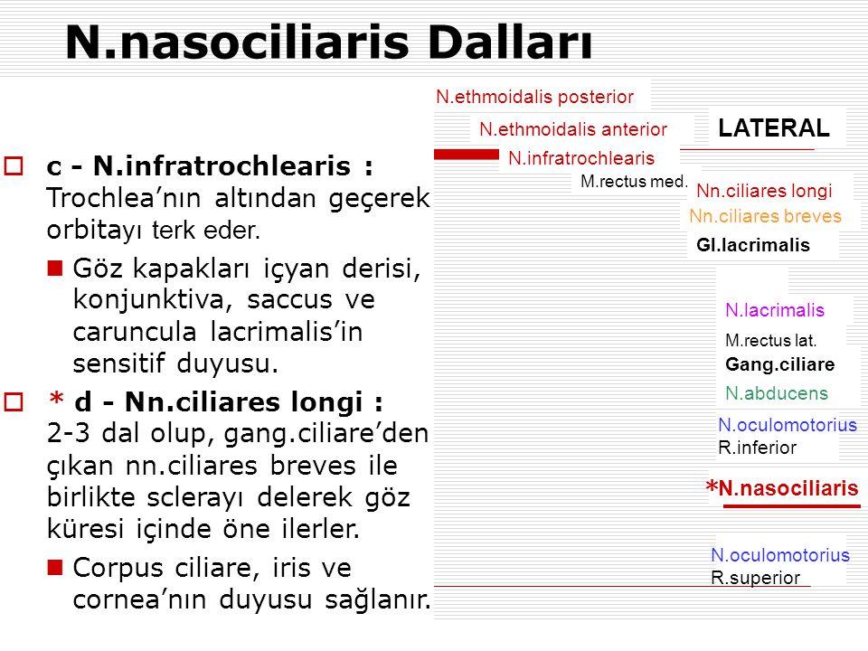 N.ethmoidalis posterior N.ethmoidalis anterior N.infratrochlearis M.rectus med. Nn.ciliares longi Nn.ciliares breves Gl.lacrimalis N.lacrimalis M.rect