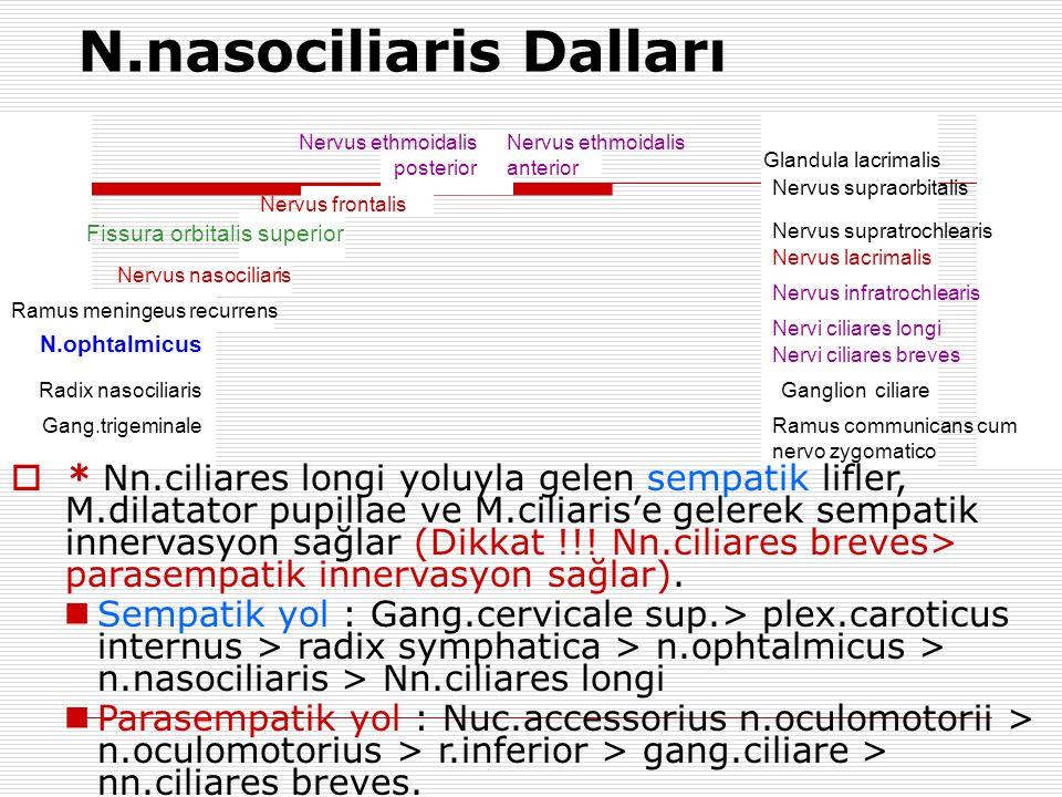 Gang.trigeminale Radix nasociliaris N.ophtalmicus Ramus meningeus recurrens Nervus nasociliaris Fissura orbitalis superior Nervus frontalis Nervus eth