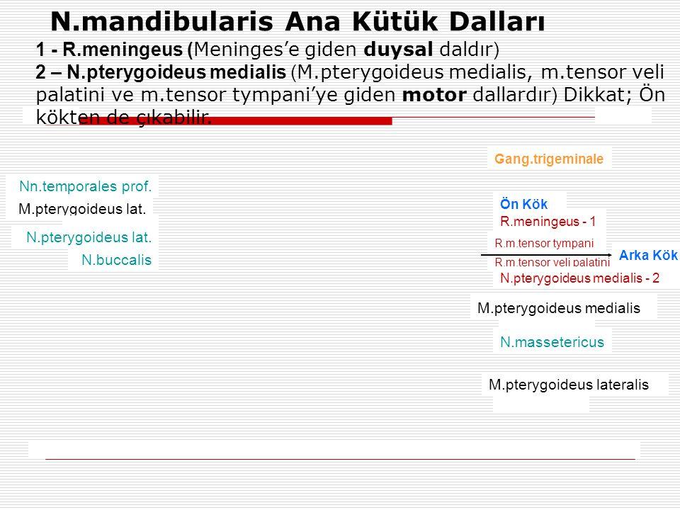 N.mandibularis Ana Kütük Dalları Gang.trigeminale Ön Kök R.meningeus - 1 R.m.tensor tympani Arka Kök R.m.tensor veli palatini N.pterygoideus medialis