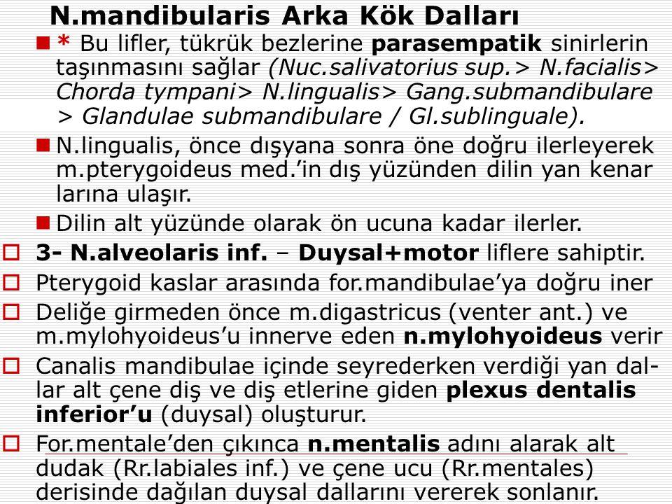  * Bu lifler, tükrük bezlerine parasempatik sinirlerin taşınmasını sağlar (Nuc.salivatorius sup.> N.facialis> Chorda tympani> N.lingualis> Gang.subma