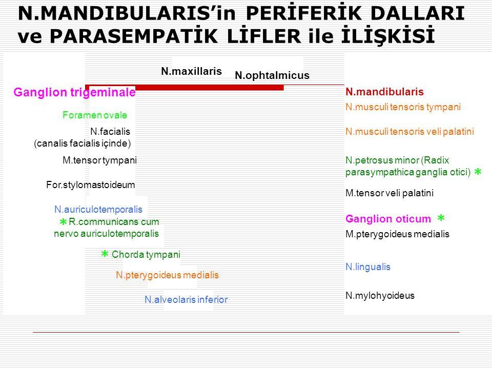 N.MANDIBULARIS'in PERİFERİK DALLARI ve PARASEMPATİK LİFLER ile İLİŞKİSİ Ganglion trigeminale N.maxillaris N.ophtalmicus N.mandibularis N.musculi tenso