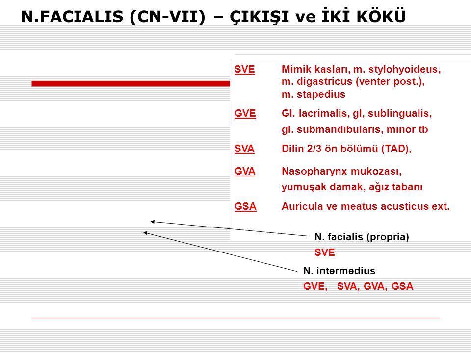 SVEMimik kasları, m. stylohyoideus, m. digastricus (venter post.), m. stapedius GVEGl. lacrimalis, gl, sublingualis, gl. submandibularis, minör tb SVA