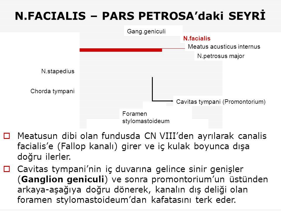 N.FACIALIS – PARS PETROSA'daki SEYRİ Gang.geniculi Malleus İncus Membrana tympanica Chorda tympani  Meatusun dibi olan fundusda CN VIII'den ayrılarak