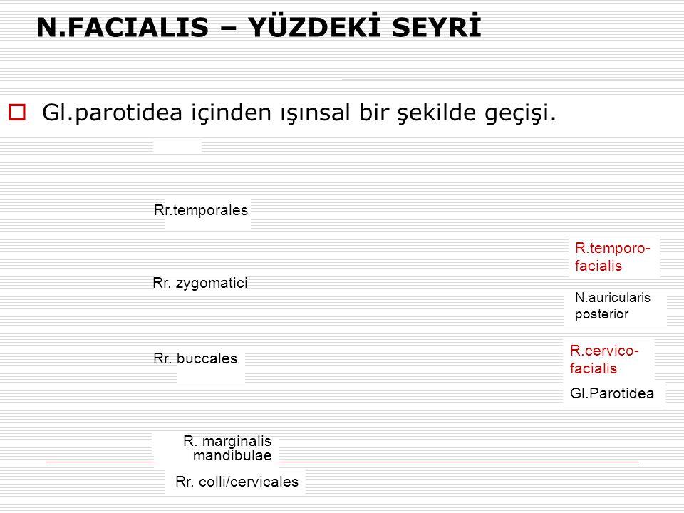 Rr. colli/cervicales R.temporo- facialis R.cervico- facialis Gl.Parotidea N.FACIALIS – YÜZDEKİ SEYRİ  Gl.parotidea içinden ışınsal bir şekilde geçişi