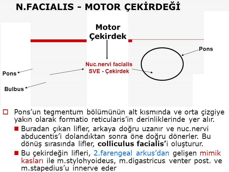 N.FACIALIS - MOTOR ÇEKİRDEĞİ Nuc.nervi facialis SVE - Çekirdek Pons  Pons'un tegmentum bölümünün alt kısmında ve orta çizgiye yakın olarak formatio r