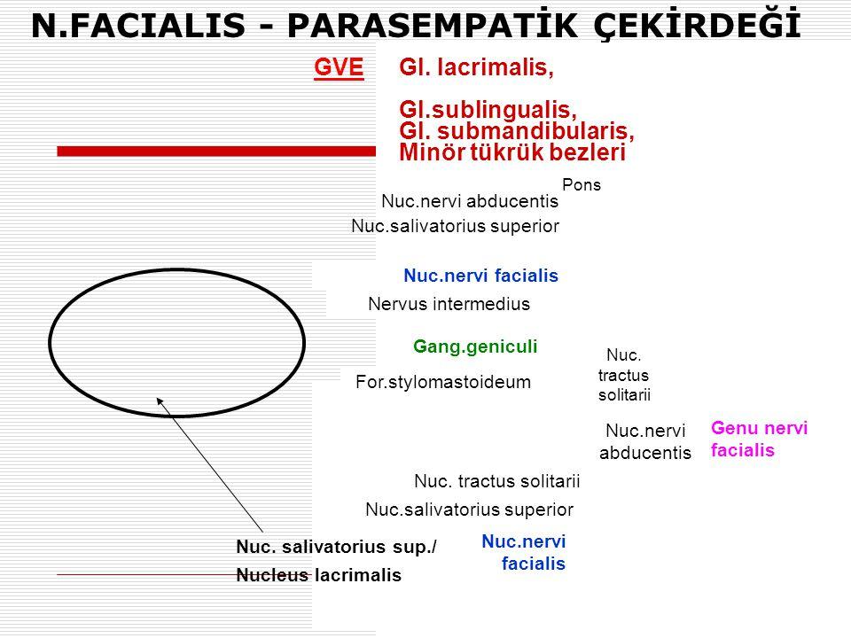 N.FACIALIS - PARASEMPATİK ÇEKİRDEĞİ Pons Nuc.nervi facialis Nervus intermedius Gang.geniculi For.stylomastoideum Nuc. tractus solitarii Nuc.salivatori