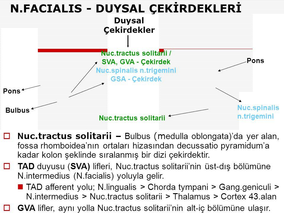 N.FACIALIS - DUYSAL ÇEKİRDEKLERİ Nuc.tractus solitarii / SVA, GVA - Çekirdek Nuc.spinalis n.trigemini GSA - Çekirdek Pons  N uc.tractus solitarii – B