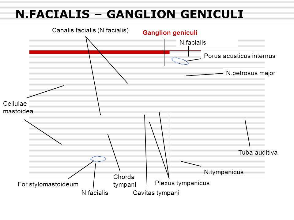 N.FACIALIS – GANGLION GENICULI Ganglion geniculi N.facialis Porus acusticus internus N.petrosus major For.stylomastoideum Plexus tympanicus N.facialis