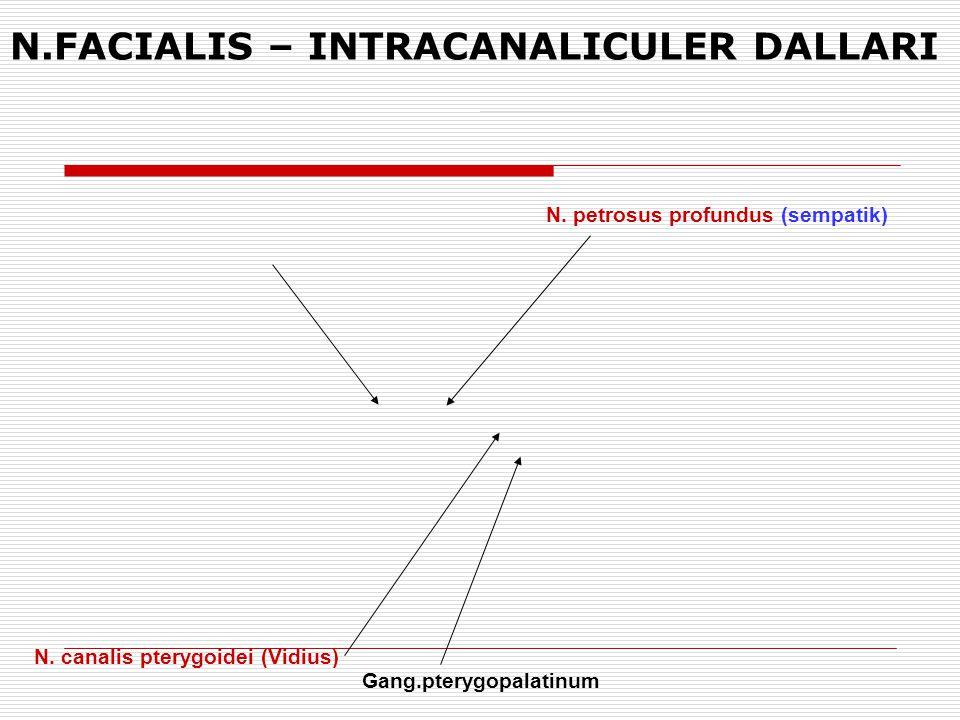 N. petrosus profundus (sempatik) N. canalis pterygoidei (Vidius) Gang.pterygopalatinum N.FACIALIS – INTRACANALICULER DALLARI