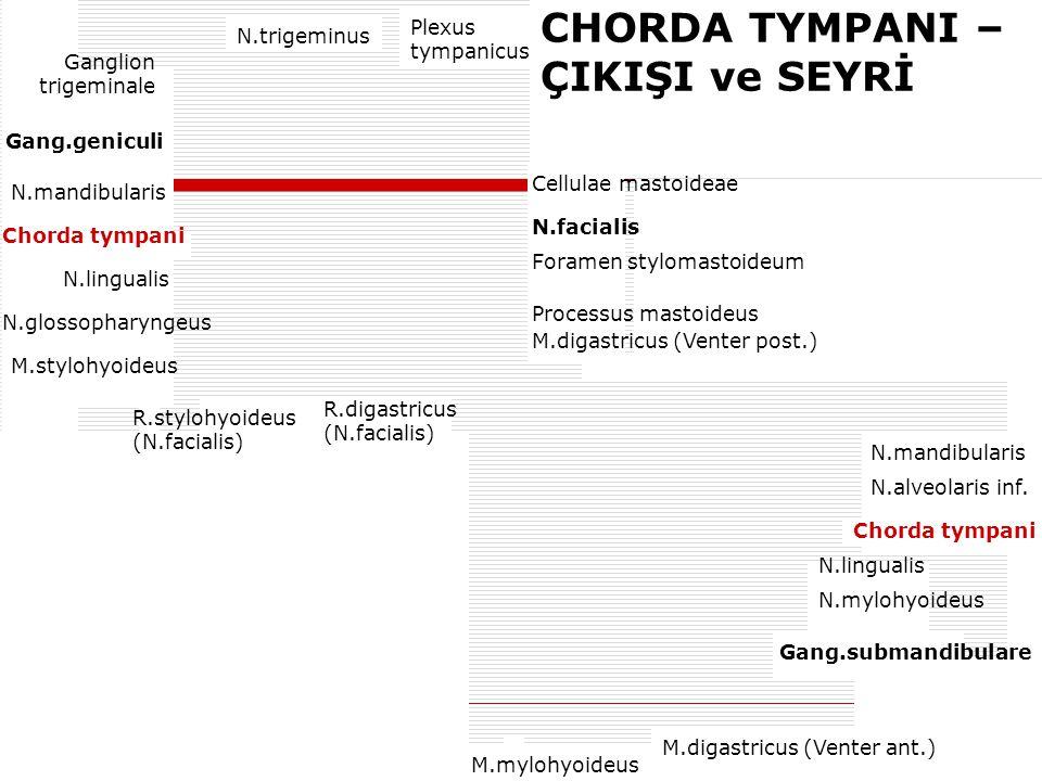 CHORDA TYMPANI – ÇIKIŞI ve SEYRİ N.trigeminus Plexus tympanicus Ganglion trigeminale Gang.geniculi N.mandibularis N.lingualis N.glossopharyngeus M.sty