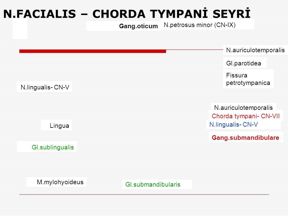 Gang.oticum N.petrosus minor (CN-IX) N.auriculotemporalis Gl.parotidea Fissura petrotympanica N.auriculotemporalis Chorda tympani- CN-VII N.lingualis-