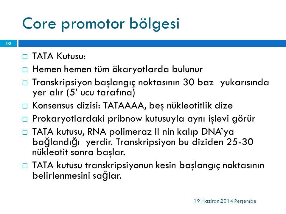 Core promotor bölgesi  TATA Kutusu:  Hemen hemen tüm ökaryotlarda bulunur  Transkripsiyon başlangıç noktasının 30 baz yukarısında yer alır (5' ucu