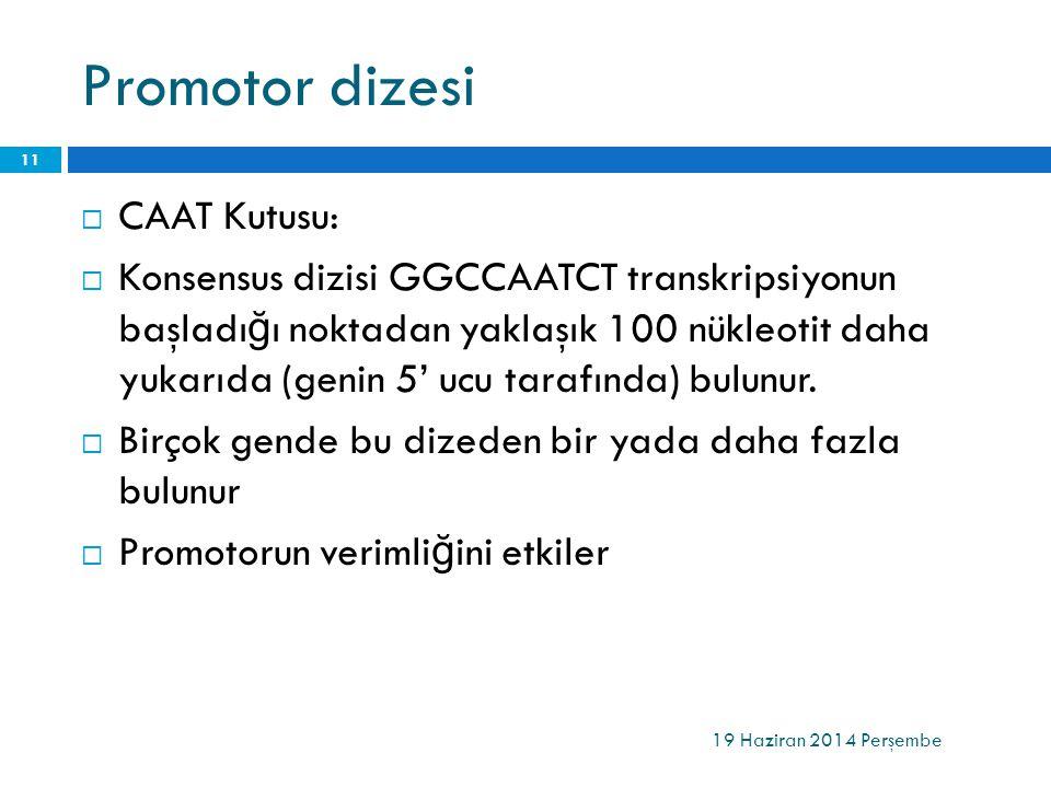 Promotor dizesi  CAAT Kutusu:  Konsensus dizisi GGCCAATCT transkripsiyonun başladı ğ ı noktadan yaklaşık 100 nükleotit daha yukarıda (genin 5' ucu t