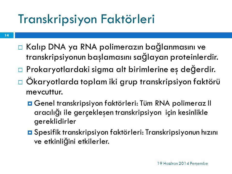 Transkripsiyon Faktörleri  Kalıp DNA ya RNA polimerazın ba ğ lanmasını ve transkripsiyonun başlamasını sa ğ layan proteinlerdir.  Prokaryotlardaki s