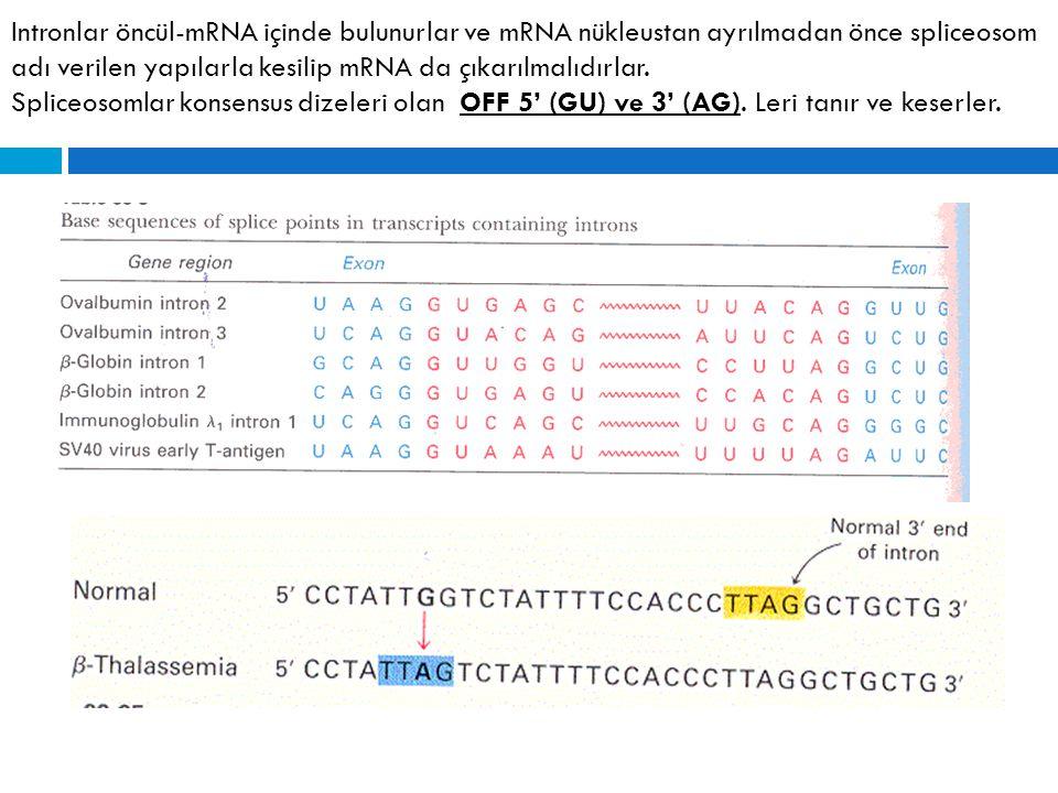 Intronlar öncül-mRNA içinde bulunurlar ve mRNA nükleustan ayrılmadan önce spliceosom adı verilen yapılarla kesilip mRNA da çıkarılmalıdırlar. Spliceos