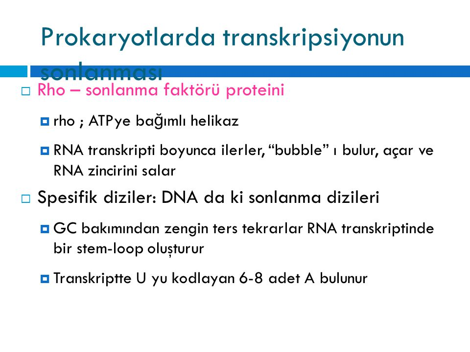 """Prokaryotlarda transkripsiyonun sonlanması  Rho – sonlanma faktörü proteini  rho ; ATPye ba ğ ımlı helikaz  RNA transkripti boyunca ilerler, """"bubbl"""