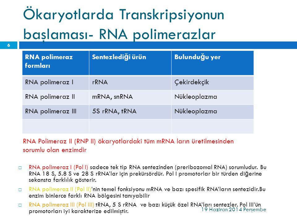 Ökaryotlarda Transkripsiyonun başlaması- RNA polimerazlar RNA polimeraz formları Sentezledi ğ i ürünBulundu ğ u yer RNA polimeraz IrRNAÇekirdekçik RNA