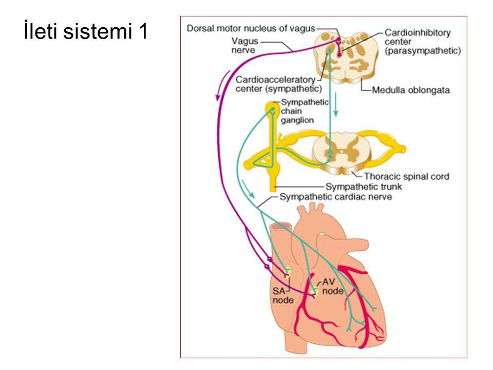 Sinüs Arresti •Sinüs nodu bir impuls başlatamadığı zaman oluşur.
