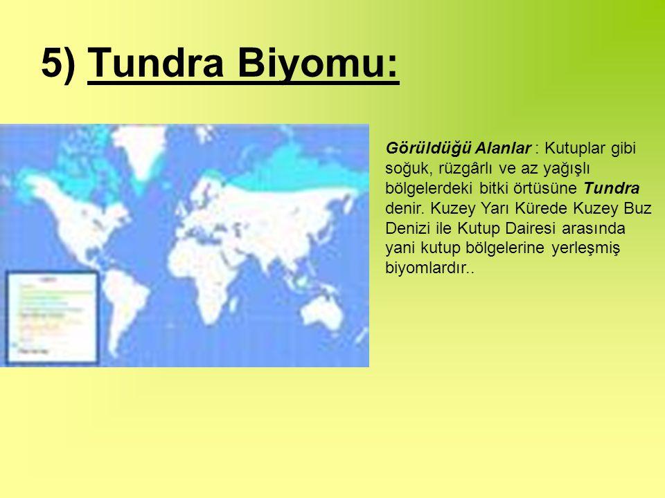 5) Tundra Biyomu: Görüldüğü Alanlar : Kutuplar gibi soğuk, rüzgârlı ve az yağışlı bölgelerdeki bitki örtüsüne Tundra denir.