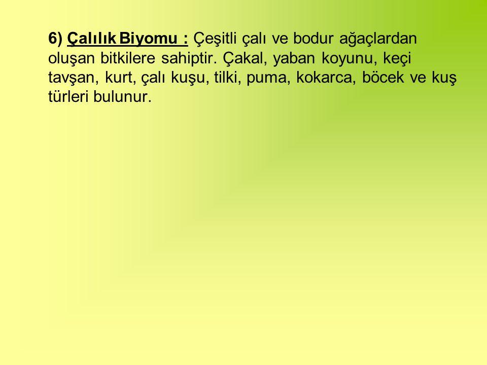 6) Çalılık Biyomu : Çeşitli çalı ve bodur ağaçlardan oluşan bitkilere sahiptir.