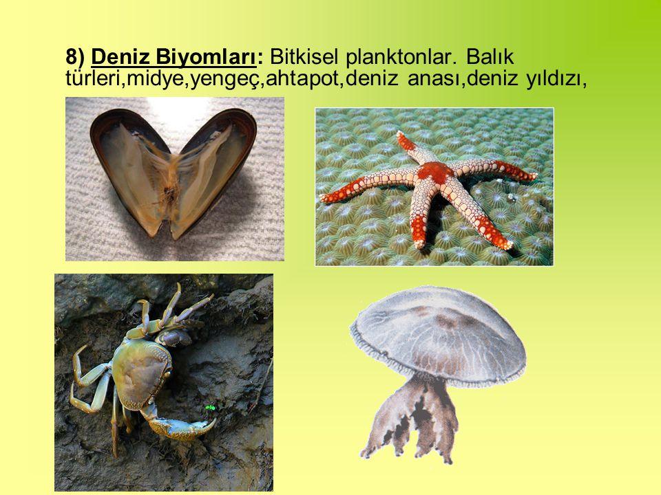 8) Deniz Biyomları: Bitkisel planktonlar.