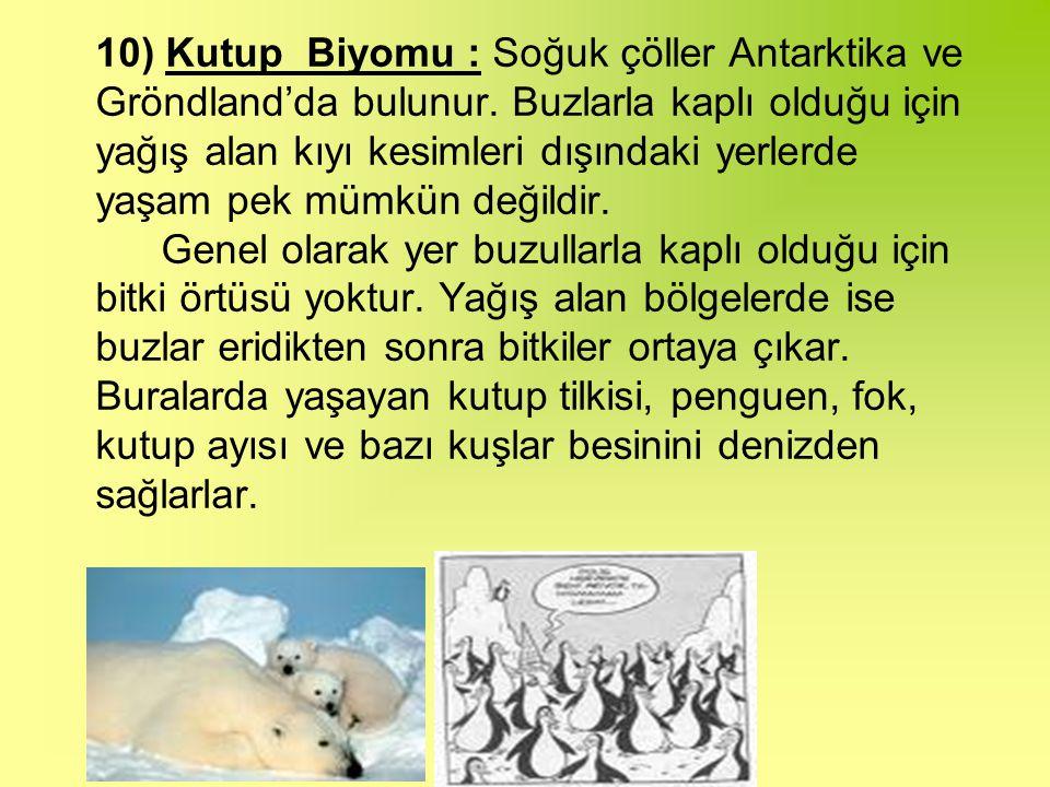 10) Kutup Biyomu : Soğuk çöller Antarktika ve Gröndland'da bulunur.