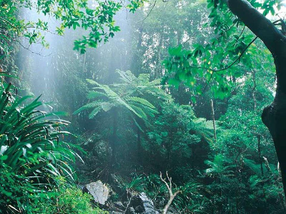 Bitkilerin su kazanmak ve terlemeyi azaltmak için geliştirdikleri özellikler: 1-Bitkilerin kök sistemleri gelişmiştir.