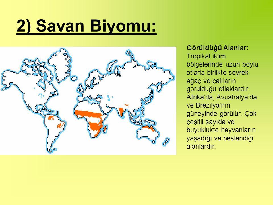 2) Savan Biyomu: Görüldüğü Alanlar: Tropikal iklim bölgelerinde uzun boylu otlarla birlikte seyrek ağaç ve çalıların görüldüğü otlaklardır.
